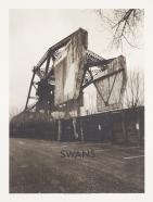 swans2015