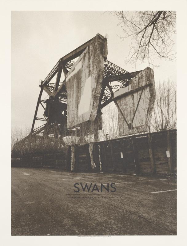 swans28001.jpg